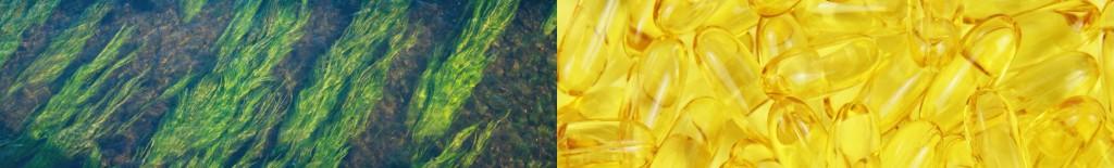 DHA EPA Omega3 Alge Ernährungsplan